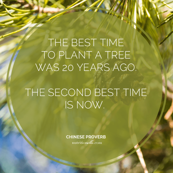 the best time to plant a tree proverb nutritionella